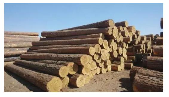 常见12种家具木材优缺点和使用地方.png